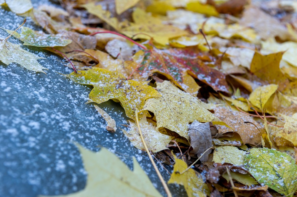 Осенняя погода окончательно установилась в Санкт-Петербурге
