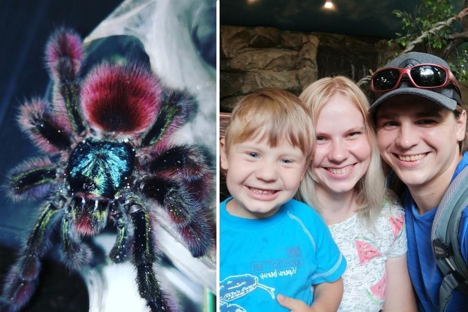 Дмитрий переехал вместе с женой и сыном ради пауков. Фото: Дмитрий ЖЕЛТИКОВ.