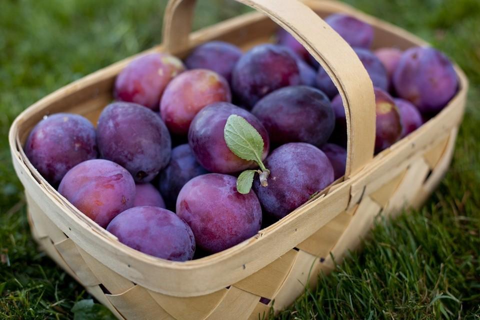 Эко-слива и обычная слива имеют в Молдове одну цену на внутреннем рынке. Фото: novostipmr.com