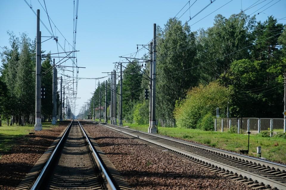 Грибник попал под поезд в Санкт-Петербурге