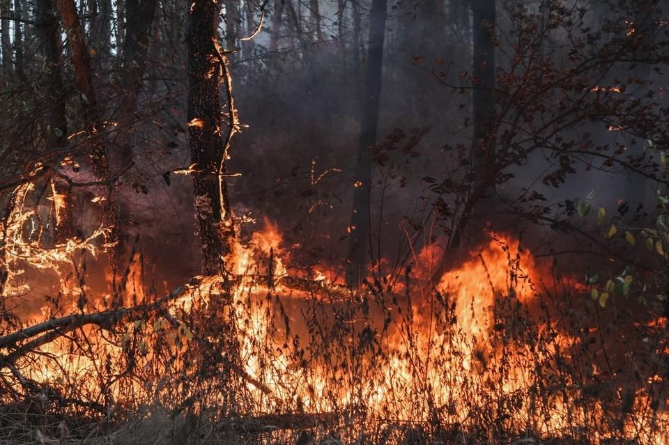 Лесные пожары охватили Воронежскую область.