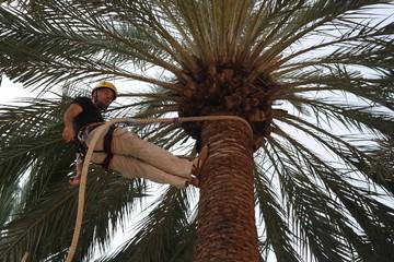 Эльче: Самая древняя красавица Испании, пальмы из списка ЮНЕСКО и финики с хамоном