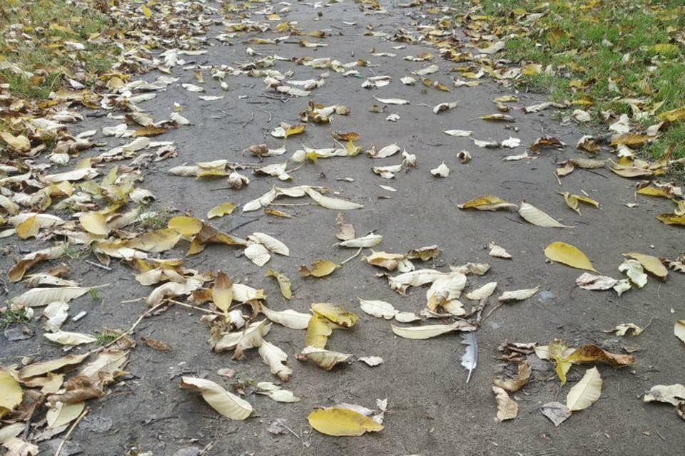 Обстановка в Хабаровском крае на 1 октября 2020: погода, заболеваемость, радиационный фон