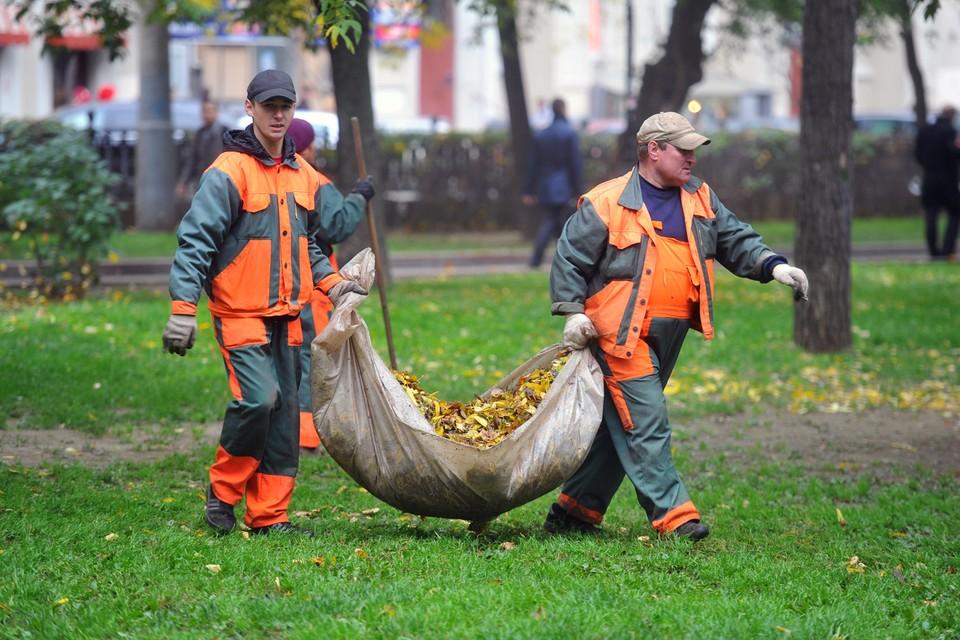 Специалисты считают, пользы от опавших листьев куда больше, чем вреда.