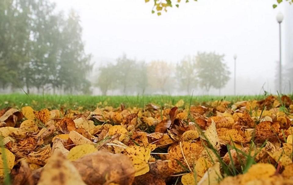 Температура воздуха резко понизится вечером 16 октября по северу и западу края до 0°, в Перми до +2…+4°.