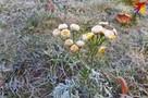 На выходных 17-18 октября выпадет первый снег. А какой будет зима в Беларуси 2020-2021 года?