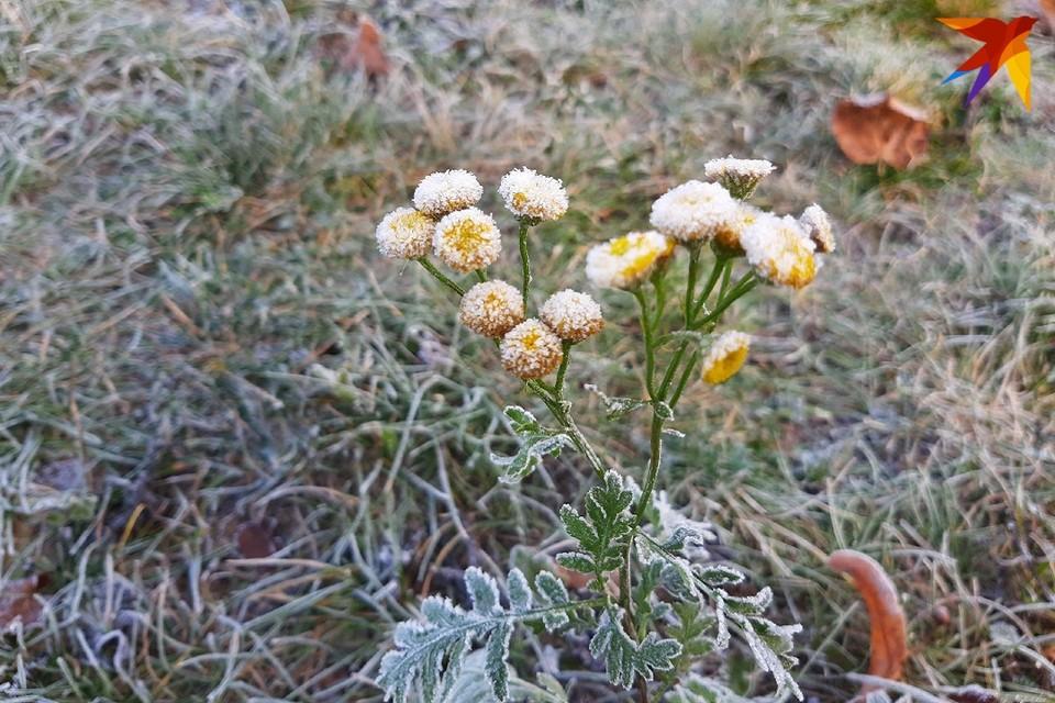 На выходных, 17 - 18 октября в Беларусь придут первые заморозки.