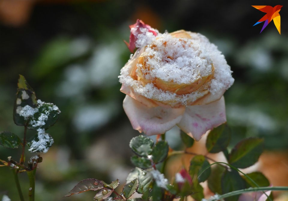 16 октября в Мурманске зафиксировали первый заморозок.