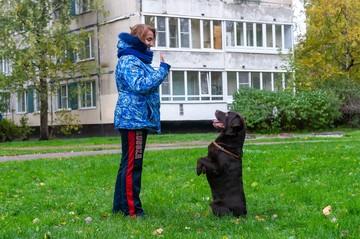 Дневник догситтера: «Собак бросают даже олигархи, которым лень пристраивать животное»