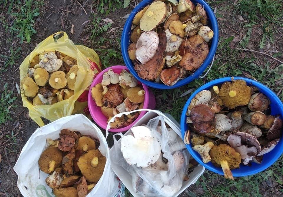 Ну ты и поганка: Как жителям Молдовы не отравиться лесными грибами - советы молдавских специалистов
