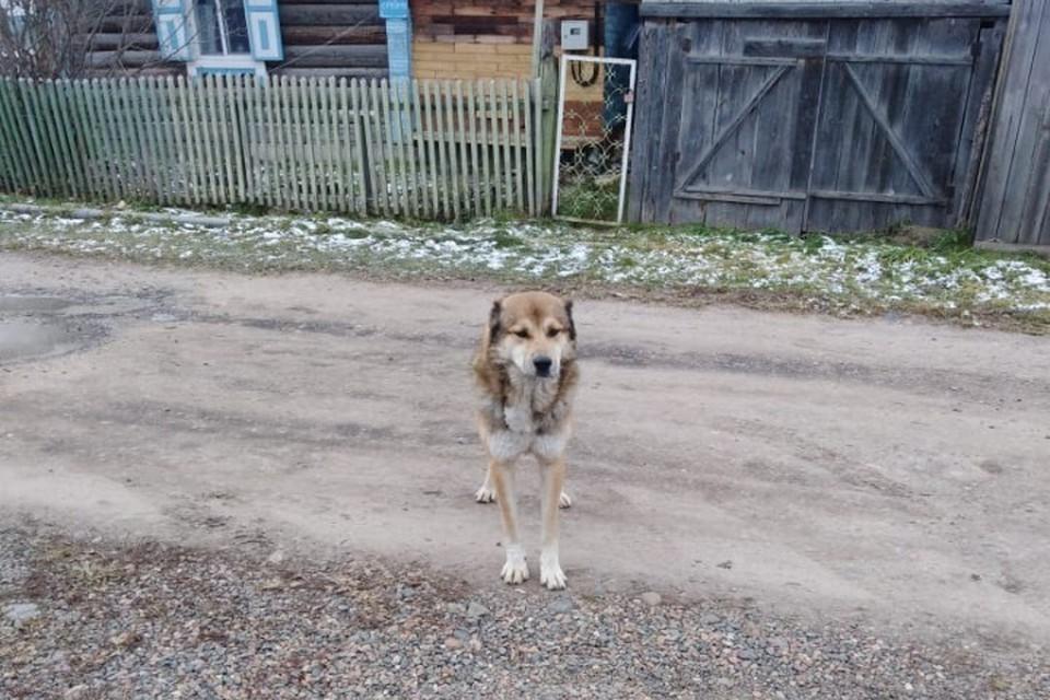Таким вернулся пес к своей второй семье Фото: волонтеры