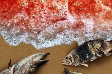 Ученые назвали возможную причину эко-ЧП на Камчатке: «красный прилив»