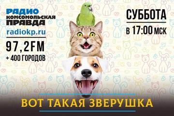 Уберите лапы! Со следующего года в России будет запрещено приводить домашних животных на пляжи