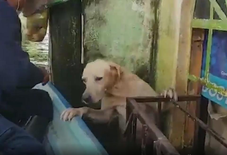 Моряки спасти лабрадора во время наводнения в Мексике. Фото: кадр из видео