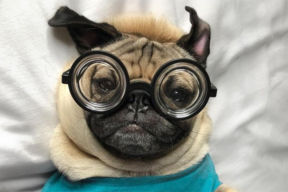 Успешными инстаграм-блогерами становятся коты, собаки и даже лисы.