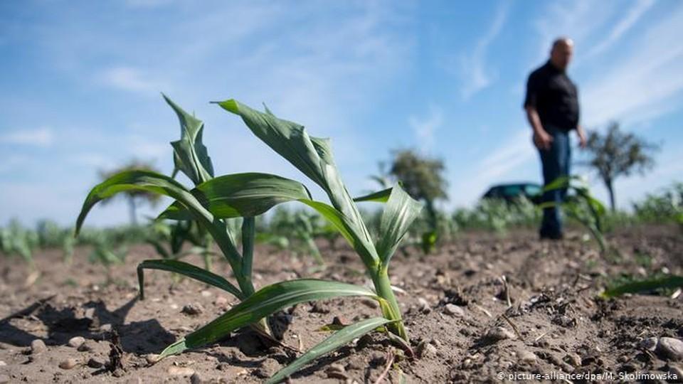 Благодаря поддержке, оказанной правительством, аграрии провели осеннюю посевную. Фото:соцсети