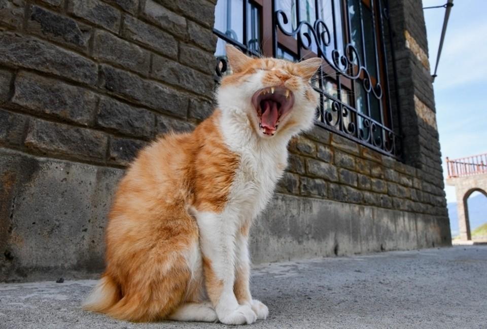 Запущено приложение для перевода кошачьего мяуканья