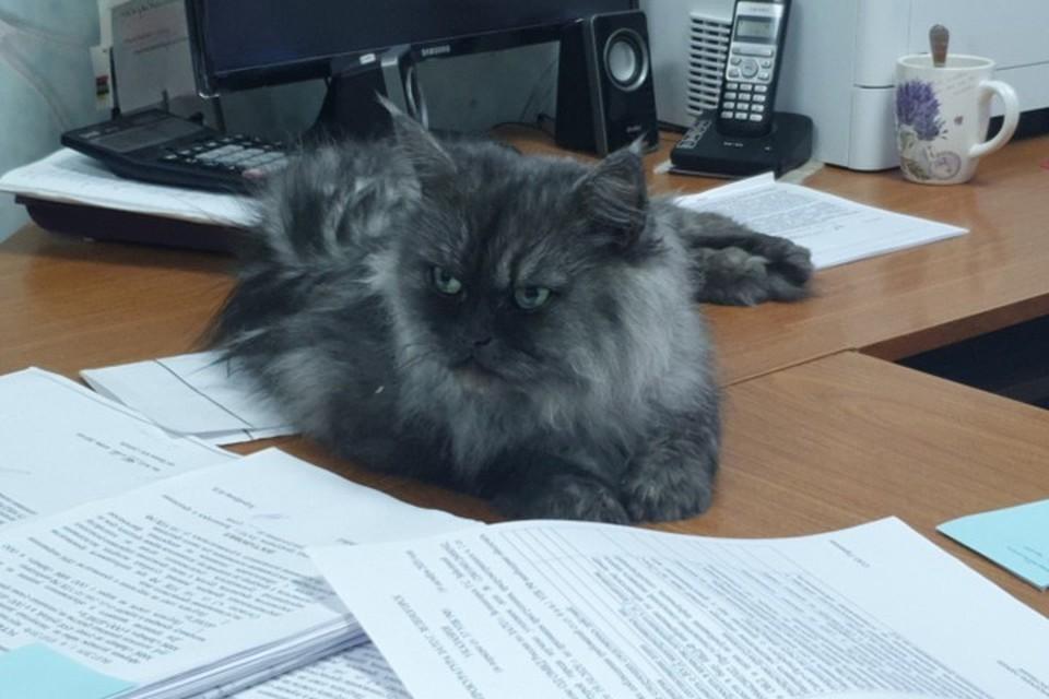 В Красноярском крае сброшенная с балкона кошка поселилась в отделе полиции. Стоп-кадр видео