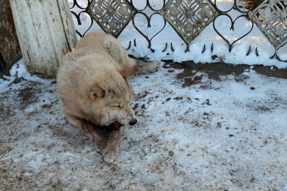 Фото пса без челюсти разместили в соцсетях жители Барды. Фото: группа ВКонтакте Барда.Да