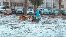 «Они схватили меня за ногу, до сих пор делаю уколы»: жители Воронежа жалуются на агрессивную свору собак