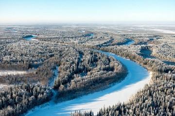 Цифровизация лесной отрасли поможет снизить ущерб лесному фонду России