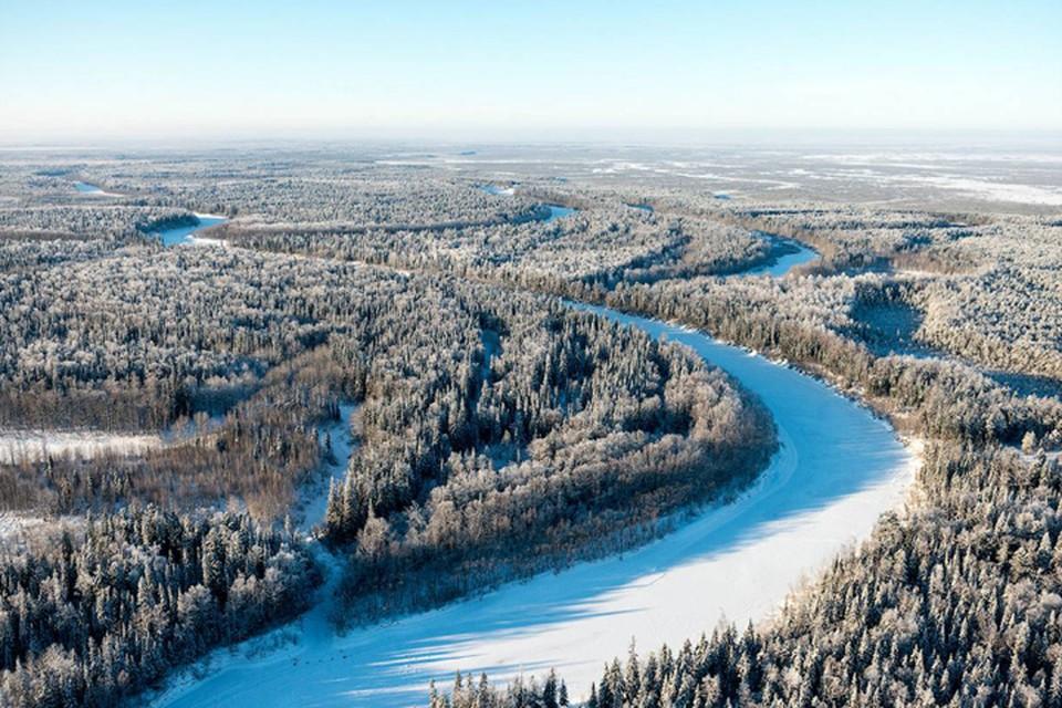 Лесной фонд России возьмут под цифровой контроль. Фото: rosleshoz.gov.ru