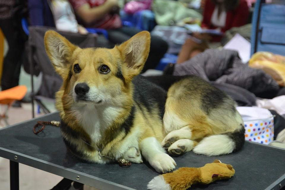 Правительство одобрило запрет на изъятие домашних животных за долги