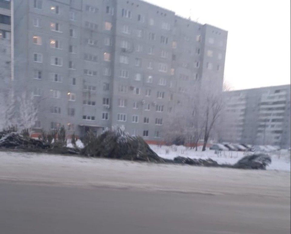 Множество деревьев остались на месте елочного базара, и никто не собирается их убрать.