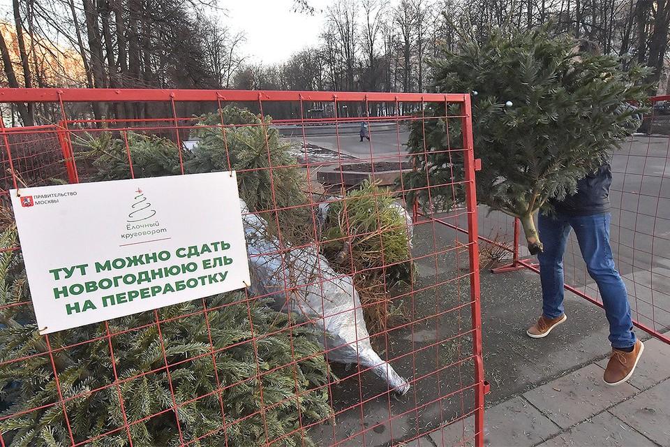 Со 2 января по 20 февраля 2021 года в Москве проходит акция по сбору новогодних елей.