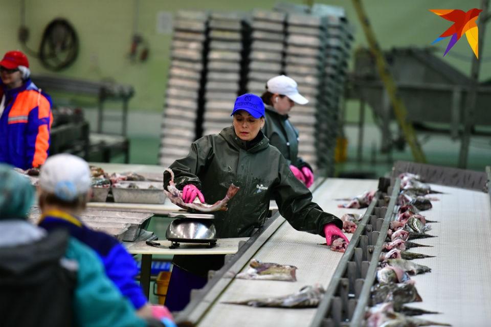 Рыбной отраслью теперь заведует министерство природных ресурсов и экологии Мурманской области.
