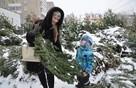 Куда пермякам сдать новогоднюю елку