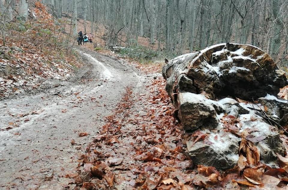 Южная зима очень похожа на позднюю осень.