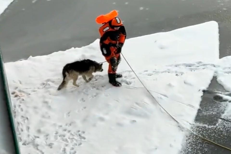 Три храбрых девушки-спасателя вытащили продрогшего пса со льдины в Кронштадте. Фото: vk.com/koshkispas
