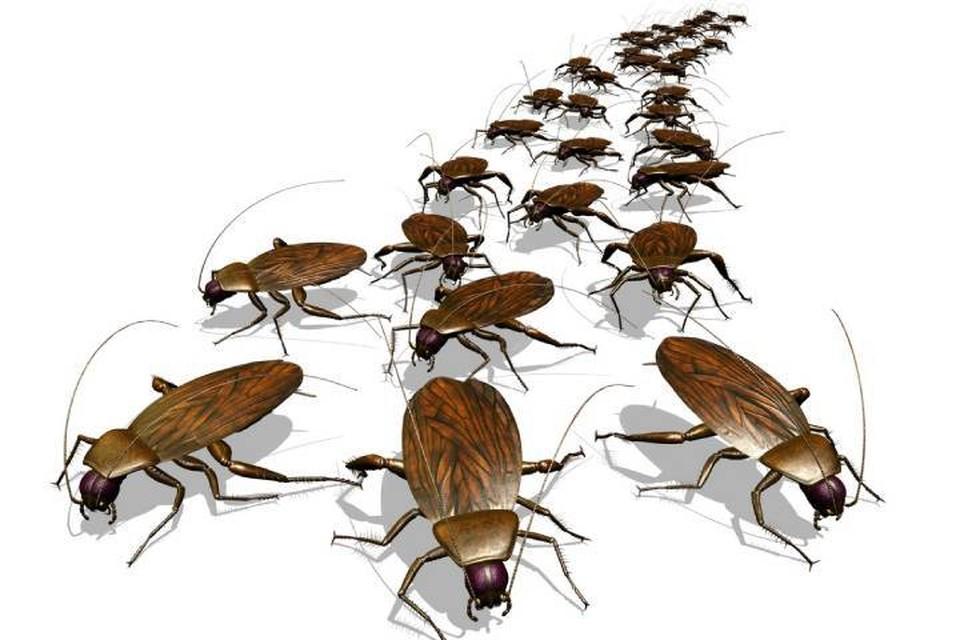 Тараканы пополняют ряды, готовясь к нашествию.