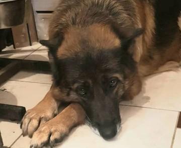 «По ее глазам текли слезы!»: от больной собаки цинично избавились хозяева, выбросив в поле вместе с калошами