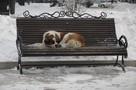 Новые приюты и больше денег зоозащитникам: как волгоградские власти будут решать проблему с бездомными собаками