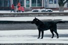Напала сзади: в Советском районе Орла девушку покусала бездомная собака