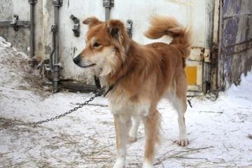 Ивановские депутаты передали приюту для бездомных животных две тонны корма