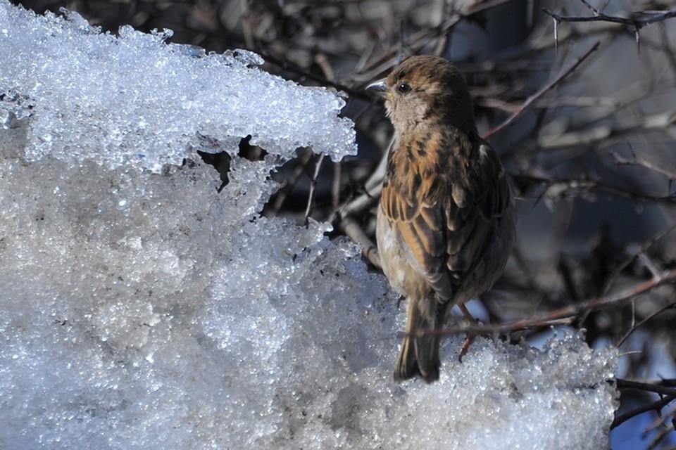 Лютых морозов и зимних температур уже можно не бояться.