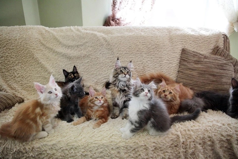 Сейчас бездомные кошки Воркуты ютятся в коморках, подвалах и гаражах.