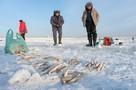 Морские тараканы и «подводный лифт»: Как зимой в Петербурге ловят корюшку