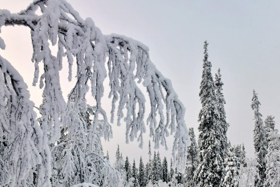 16 февраля потепления не ожидается.