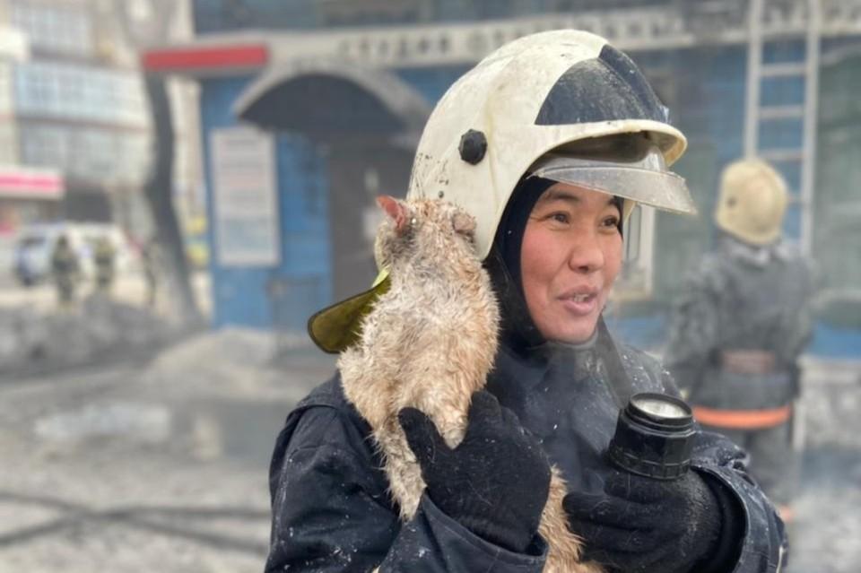 Пожарные в Иркутске спасли из горящего дома кота и передали его хозяйке.
