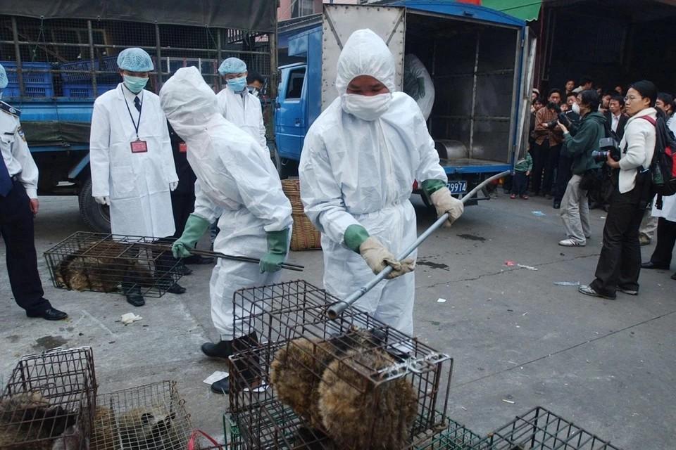 ВОЗ выясняет, мог ли коронавирус распространиться через кроликов и барсуков с рынка в Ухане