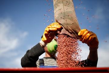 В России запретят ГМО: правительство заблокирует импорт трансгенных семян