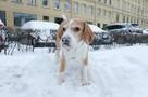 Выпадет до 30 см осадков: Главный синоптик Петербурга рассказал, когда закончится снег
