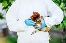 Птичий грипп H5N8 впервые передался человеку в России: опасно ли это