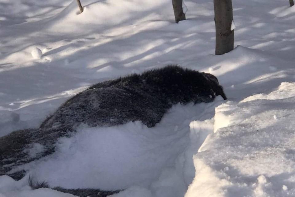 Тела животных забрала ветеринарная служба на экспертизу. Фото: vk.com/kirovhelp.dogcat