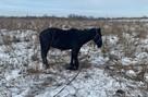Есть шанс спасти: коня, которого сбила машина, хотят оперировать