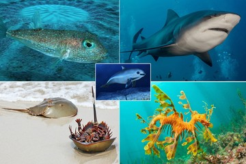 Топ-5 удивительных морских животных: неуловимая рыбка-архитектор и мечехвост, который помогает создавать вакцину от COVID-19